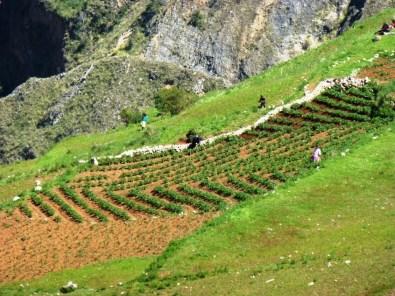 Farmers working their fields (Castillapata)